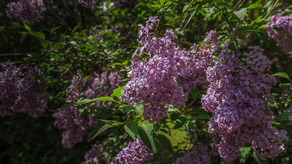 Hof Georgenau Hofgut Blüten 2