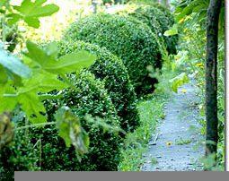 Gartenweggestaltung mit Buxbaumkugeln