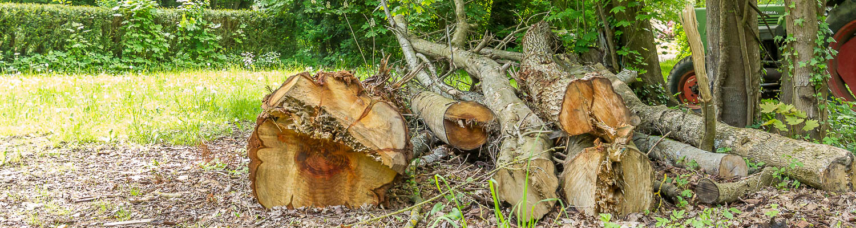 Hof Georgenau Hofgut Forst- und Baggerarbeiten Holz