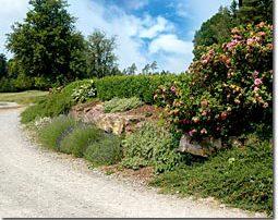Grundstückseinfassung mit Natursteinen, bepflanzt mit Buxbaumhecken und Lavendelbüschen