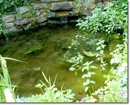 Gartenteich mit Natursteinmauer